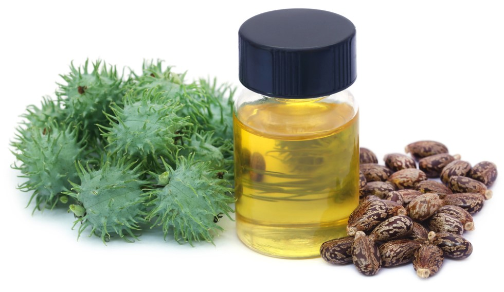 Medium sized jar of castor oil standing between a bunch of fresh and dried castor beans